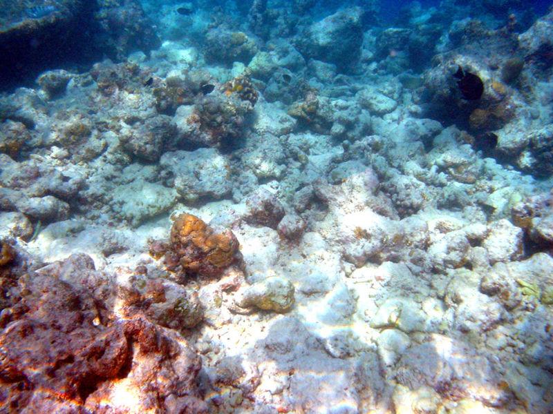 Bestand:Moofushi bleached corals.JPG
