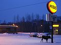 Moose at Midas - Alaska 2007.jpg