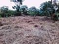 Moringa Farm.jpg