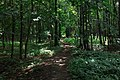 Moscow, Losiny Ostrov forest (31487579926).jpg