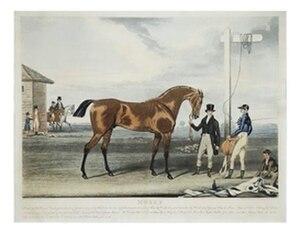 Moses (horse) - Moses, by James Pollard