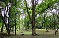 Moszczenica park.JPG