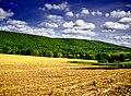 Mount Carmel Township.jpg