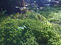 Mousse humide dans le bois (4747973824).jpg