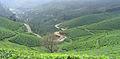 Munnar - views from Munnar (24).jpg