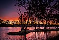 Murray River, Mildura Victoria - South Australia.jpg