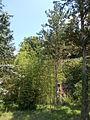 Nádliget a fák között. Geológus Kert - Tata, Kálvária-domb.JPG