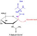 N-linked glycosidic bond.png