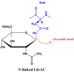 Structural biochemistrycarbohydrates wikibooks open books for an n linked glycosidic bond ccuart Image collections