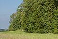 NSGOÖ 071 Hangwald Puckinger Leiten Talseite.jpg