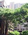 NYU-Mercer Street Residence.jpg