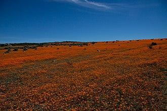 Namaqua National Park - Image: Namaqua NP3