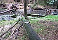 Nature reserve Pavlinino udoli (018).jpg