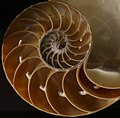 Nautilus pompilius - Fernbank Museum of Natural History - DSC00294 cutted.JPG