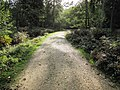 New Forest, Hampshire - panoramio (7).jpg