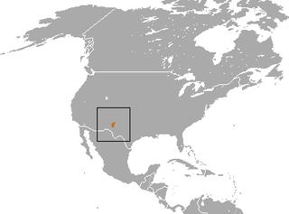 New Mexico shrew species of mammal