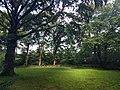 Noordwijk - Calorama boom bijtheater.jpg