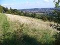 North Downs at Ranmore Common - geograph.org.uk - 559412.jpg