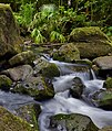 Nuuanu Pali Judd Trail Stream - panoramio.jpg