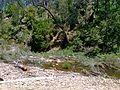 O'Briens Crossing, Lerderderg State Park - panoramio.jpg