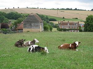 Great Wishford - Oak Apple Field