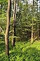 Obersteinbeck Naturschutzgebiet Am Kaelberberg 03.JPG