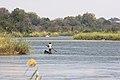 Okavango River Nunda.jpg