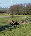Old bridge near Marefield, Leicestershire - geograph.org.uk - 693696.jpg
