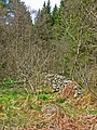 Old field wall in Penninghame Forest - geograph.org.uk - 162978.jpg