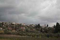 Olive orchard and houses in Elis, Greece.jpg