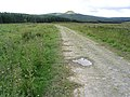 On a track heading for Stennishope - geograph.org.uk - 508023.jpg