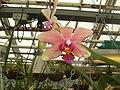 Ongeïdentificeerde orchidee3.jpg