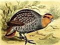 Onze vogels in huis en tuin (1869) (14563104317).jpg