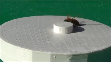 File:Operant-Conditioning-in-Honey-Bees-(Apis-mellifera-L.)-The-Cap-Pushing-Response-pone.0162347.s002.ogv