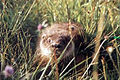 Otter in grass.jpg