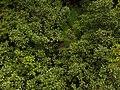 Otway national park tree top trip 1.jpg