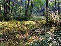 Overgrown forest road20090914 389.jpg