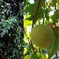 Owoce Kazimira jadalna.jpg