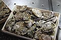 Oysters in the restaurant (37576387860).jpg