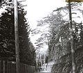 Páfrányfenyők a császári kert körül. Fortepan 95139.jpg