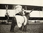 Paard na aankomst op vliegveld Waalhaven, Rotterdam. Nederland, 1924.jpg