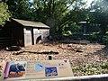 Paignton , Paignton Zoo, Peccary Enclosure - geograph.org.uk - 1484876.jpg