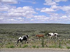 Horses graze on flat scrub land.