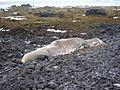 Parco dello Snæfellsjökull - Balena.JPG