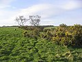 Pasture and gorse - geograph.org.uk - 366239.jpg