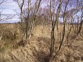 Path Crawley's Dyke - geograph.org.uk - 128120.jpg