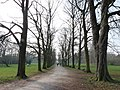 Path Through the Trees at Morden Hall - geograph.org.uk - 1210867.jpg