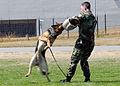 Patrol Dog Demonstration DVIDS189241.jpg