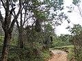 Pela Curva da Estrada - Tiradentes - MG - panoramio.jpg