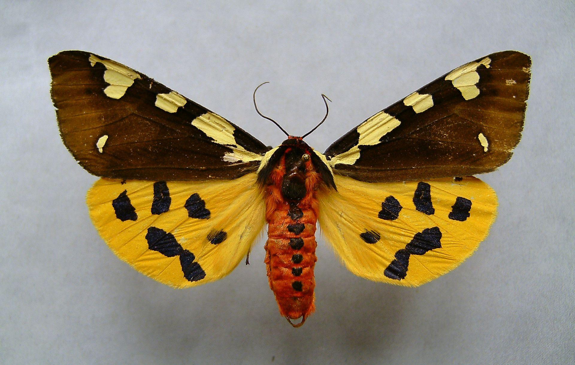 2168 Käferarten